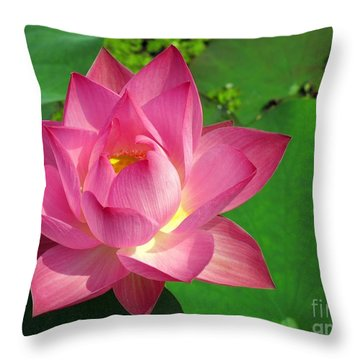 Radiant Water Lily Throw Pillow