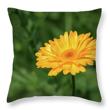 Radiant Summer Flower Soaking It Up Throw Pillow