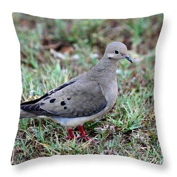 Rain Dove Throw Pillow
