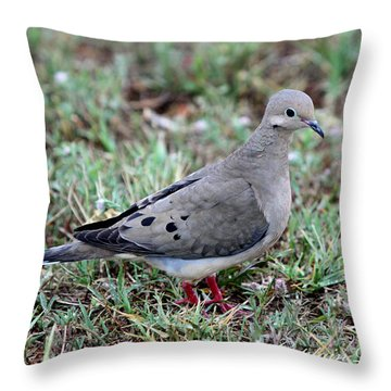 Rain Dove Throw Pillow