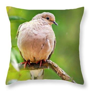 Rain Dove Throw Pillow by Christina Rollo