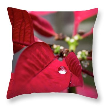 Rain Drop On A Poinsettia  Throw Pillow