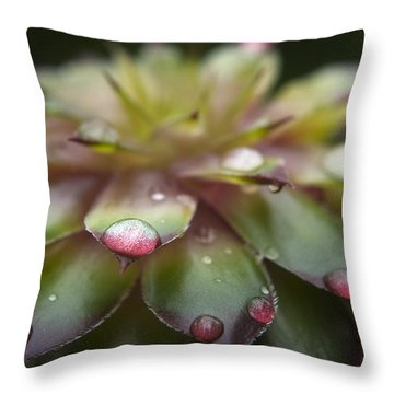 Rain Drop On Cactus Throw Pillow