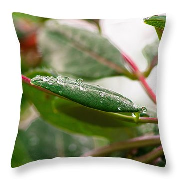 Rain Drops On A Leaf Throw Pillow