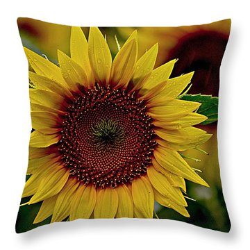 Rain Drops On The Sun Throw Pillow
