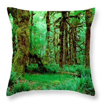 Rain Forest, Olympic National Park Throw Pillow