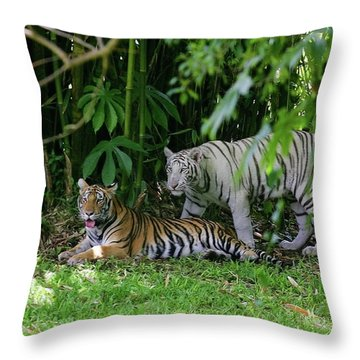 Rain Forest Tigers Throw Pillow