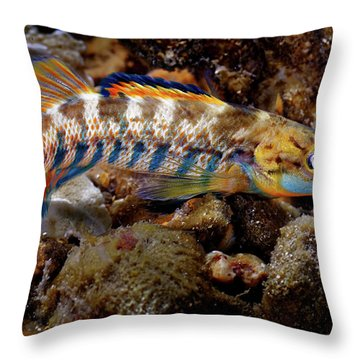 Rainbow Darter Throw Pillow