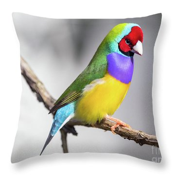 Rainbow Finch Throw Pillow