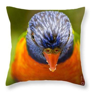 Rainbow Lorikeet Throw Pillow