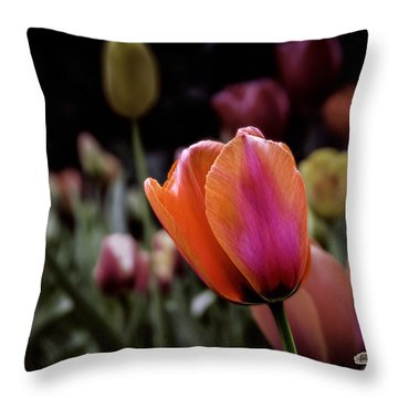 Rainbow Tulip Throw Pillow