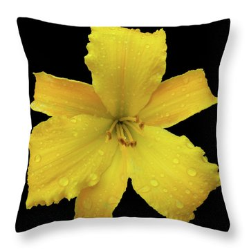 Raindrops On A Yellow Daylily Throw Pillow by Tara Hutton