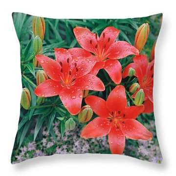 Throw Pillow featuring the photograph Raindrops On Crimson Pixie Asiatic Lily by Nancy Lee Moran