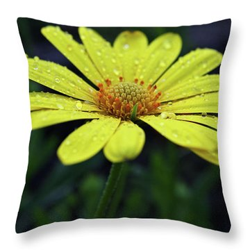 Throw Pillow featuring the photograph Raindrops On Daisy by Judy Vincent