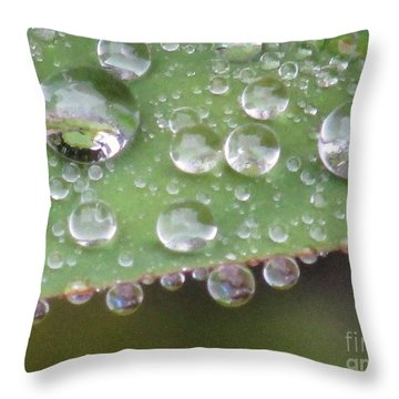 Raindrops On Leaf. Throw Pillow by Kim Tran