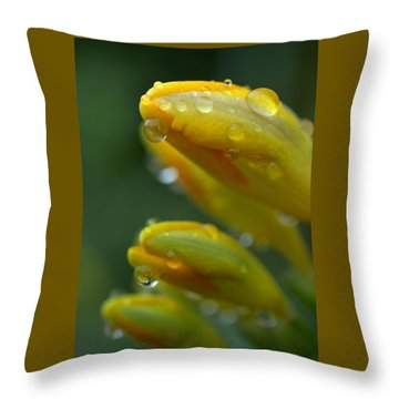 Raindrops Throw Pillow by Rachel Mirror
