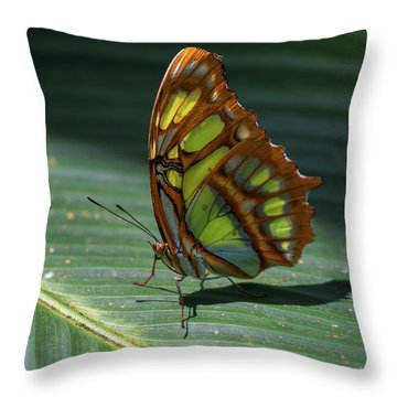 Throw Pillow featuring the photograph Rainforest Butterfly by Arthur Dodd