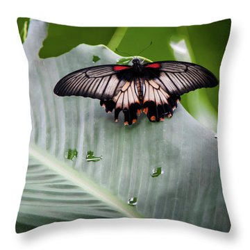 Raining Wings Throw Pillow by Karen Wiles