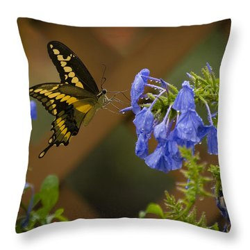 Rainy Day Lunch Throw Pillow