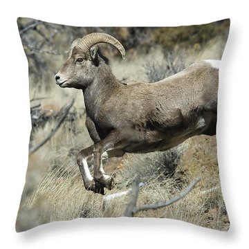 Ram In A Hurry Throw Pillow