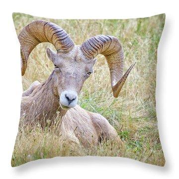 Ram In Field Throw Pillow