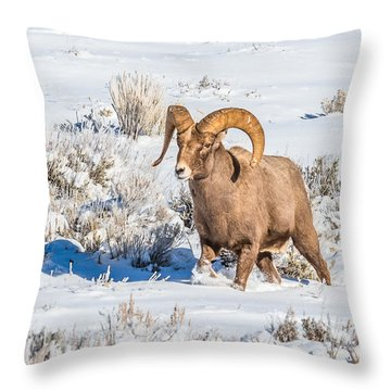 Throw Pillow featuring the photograph Ram In Rut by Yeates Photography
