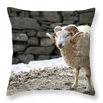 Ram In The Barnyard Throw Pillow