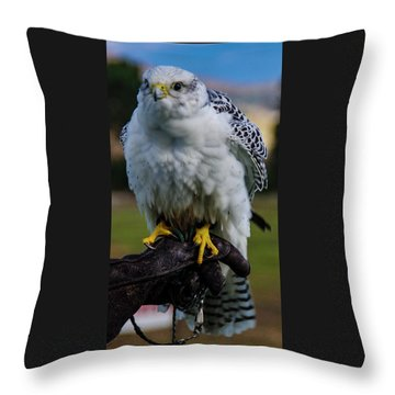 Throw Pillow featuring the photograph Ramona Hawk 1 by Phyllis Spoor