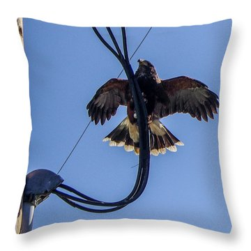 Throw Pillow featuring the photograph Ramona Hawk 5 by Phyllis Spoor