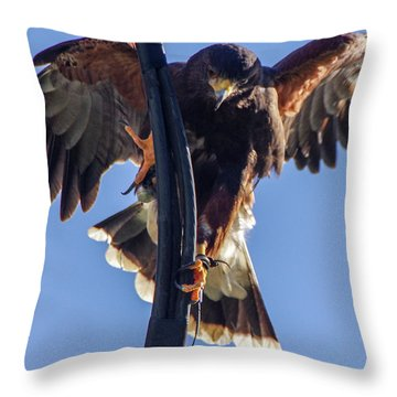Throw Pillow featuring the photograph Ramona Hawk 7 by Phyllis Spoor