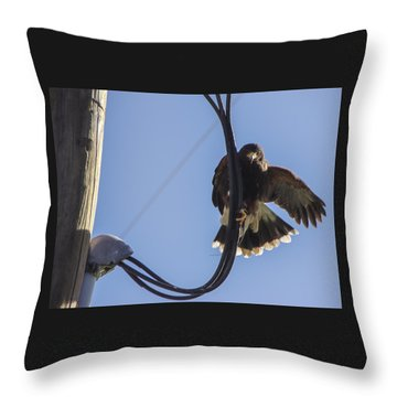 Throw Pillow featuring the photograph Ramona Hawk 8 by Phyllis Spoor