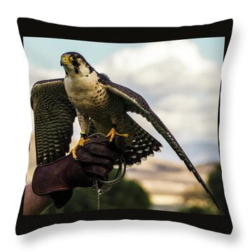 Throw Pillow featuring the photograph Ramona Hawk 9 by Phyllis Spoor