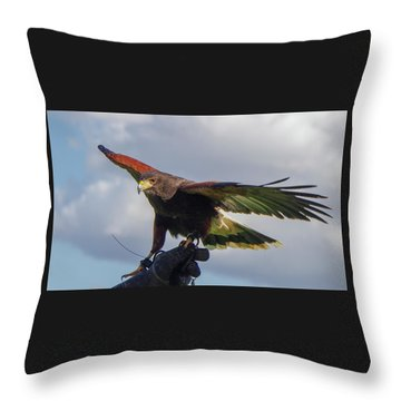 Throw Pillow featuring the photograph Ramona Hawk Watch 3 by Phyllis Spoor