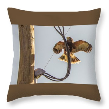 Throw Pillow featuring the photograph Ramona Hawk Watch 4 by Phyllis Spoor