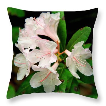 Throw Pillow featuring the photograph Rare Florida Beauty - Chapmans Rhododendron by Barbara Bowen