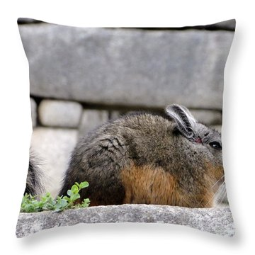 Rare Little Chincha Throw Pillow