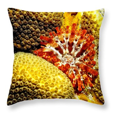 Rare Orange Tipped Corallimorph - Fire In The Sea Throw Pillow by Amy McDaniel