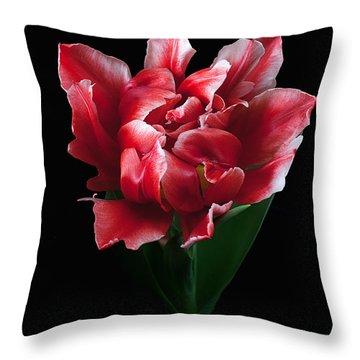 Rare Tulip Willemsoord  Throw Pillow