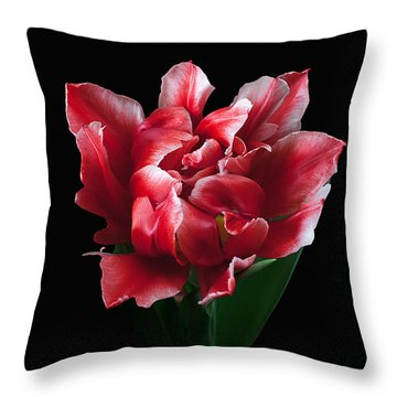 Rare Tulip Willemsoord  Throw Pillow