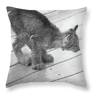 Throw Pillow featuring the photograph Crouching Kitty by Tim Newton