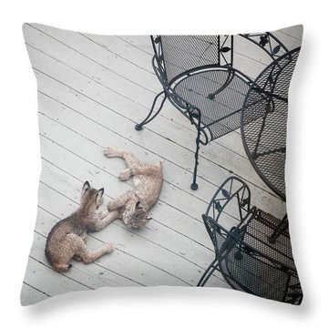 Throw Pillow featuring the photograph Wrestling Lynx by Tim Newton