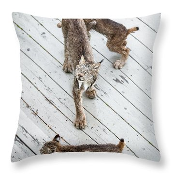 Throw Pillow featuring the photograph Always Scanning by Tim Newton