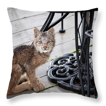 Throw Pillow featuring the photograph Are You Looking At Me by Tim Newton