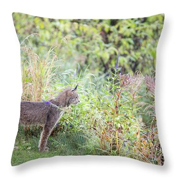 Throw Pillow featuring the photograph Ever Vigilant by Tim Newton