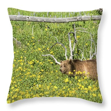 Raspberry, Sow Grizzly Throw Pillow