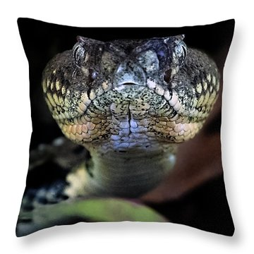 Rattler Eye To Eye Throw Pillow