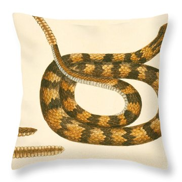 Rattlesnake Throw Pillow by Mark Catesby