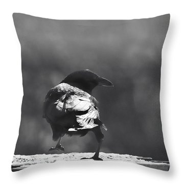 Throw Pillow featuring the photograph Raven In The Sun by Susan Capuano