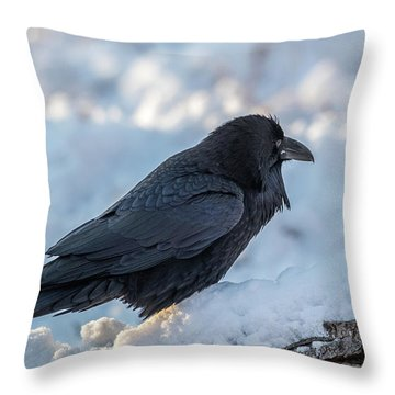 Throw Pillow featuring the photograph Raven by Paul Freidlund