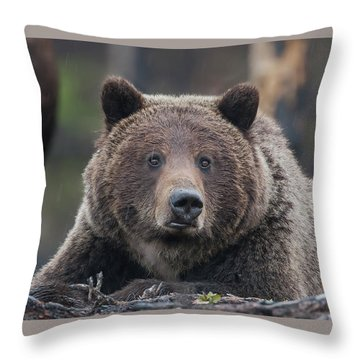 Raw, Rugged And Wild- Grizzly Throw Pillow